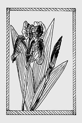 Drawing - Black Iris On Transparent Background by Masha Batkova