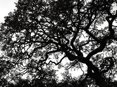 Photograph - Black Jack Oak 2 by Marilyn Hunt