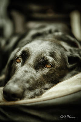 Photograph - Black Lab by Charlie Duncan