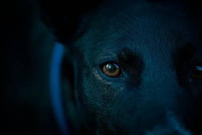 Dog Close-up Digital Art - Black Lab Close Up by Cco