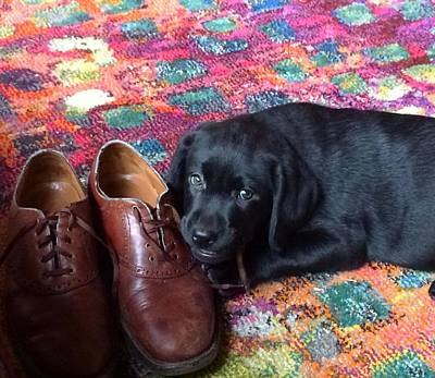 Photograph - Black Lab Puppy by Robin Regan