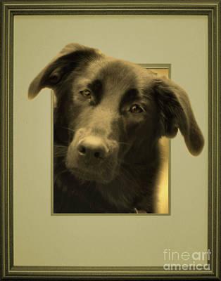 Photograph - Black Labrador Peeking Out by Smilin Eyes  Treasures