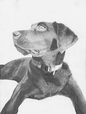 Retriever Drawing - Black Labrador Retriever by David Smith