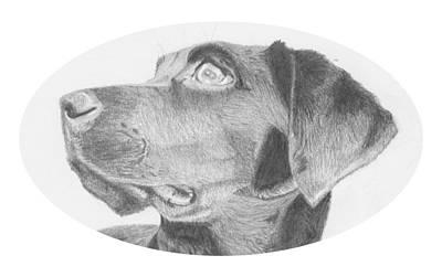 Retriever Drawing - Black Labrador Retriever Headshot by David Smith