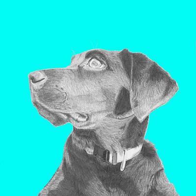 Retriever Drawing - Black Labrador Retriever In Blue Headshot by David Smith