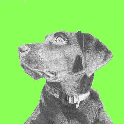 Retriever Drawing - Black Labrador Retriever In Green Headshot by David Smith