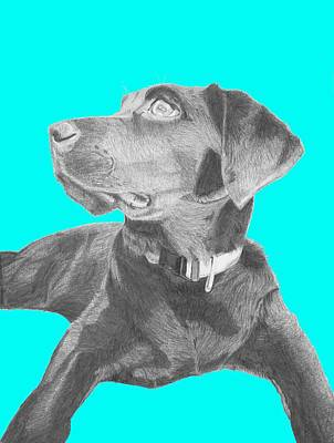 Labrador Drawing - Black Labrador Retriever With Blue Background by David Smith