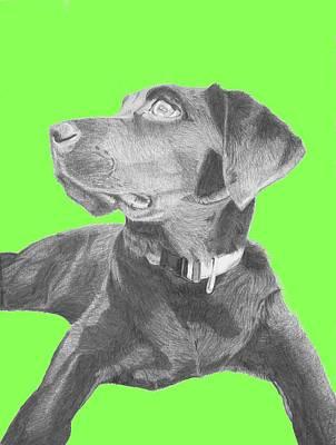 Retriever Drawing - Black Labrador Retriever With Green Background by David Smith