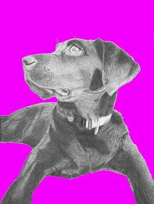Labrador Drawing - Black Labrador Retriever With Pink Background by David Smith