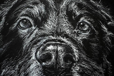Black Labrador Art Print by Sun Sohovich