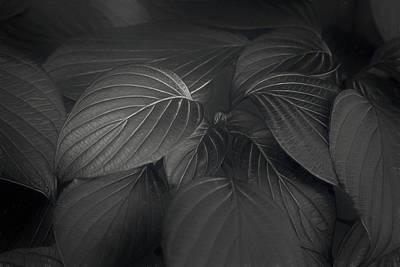Textures Photograph - Black Leaves by Scott Norris