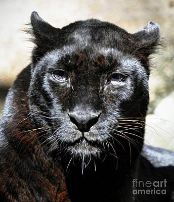 Art Print featuring the photograph Black Leopard by Savannah Gibbs