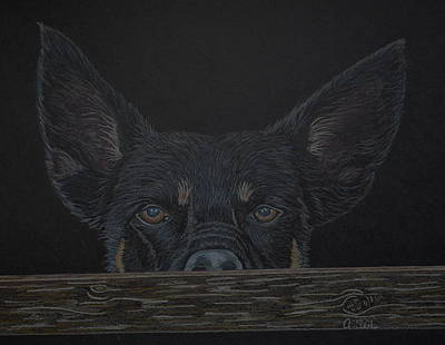 Kelpie Drawing - Black Magic by Arlette Seib