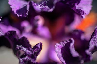 Photograph - Black Magic Woman Abstract Macro 1. The Beauty Of Irises by Jenny Rainbow
