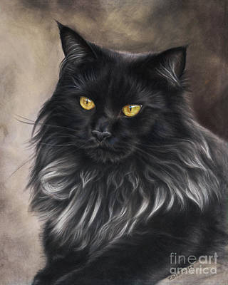 Cats Drawing - Black Maine Coon by Tobiasz Stefaniak
