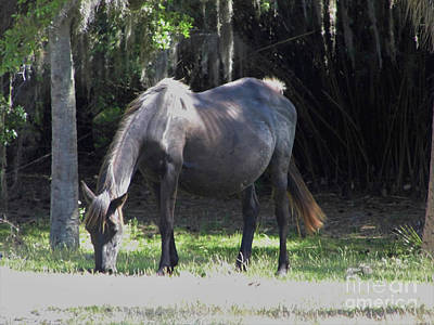 Photograph - Black Mare by D Hackett