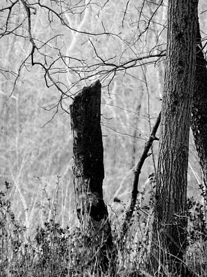Photograph - Black Monk Stump by Wild Thing