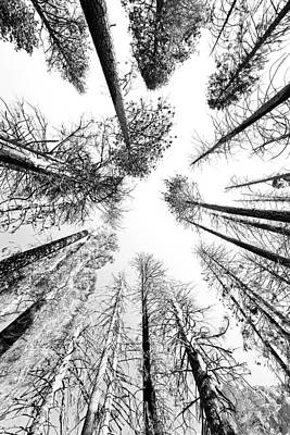 Black N White Sky-trees Art Print by Rick Pham