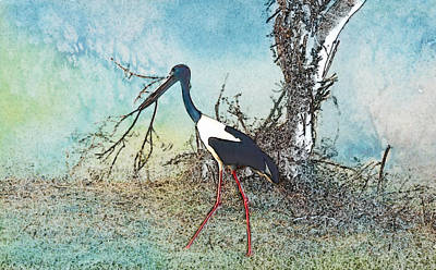 Photograph - Black Neck Stork  by Manjot Singh Sachdeva