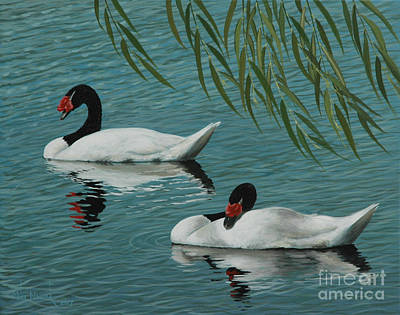 Painting - Black Neck Swans Under The Willow  by Michael Nowak