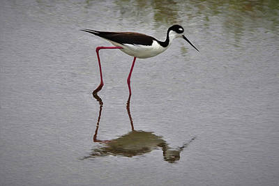Digital Art - Black Necked Stilt Da by Ernie Echols