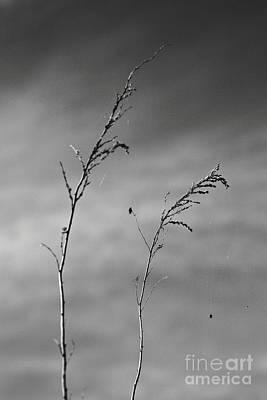 Photograph - Black Nightmare by Lara Morrison