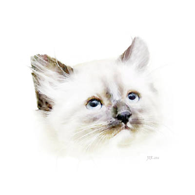 Painting - Black Nosed Kitten by Bamalam  Photography
