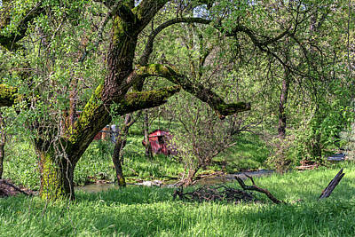 Photograph - Black Oak And Creek by Jim Thompson