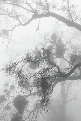 Photograph - Black Oak Branches And Mistletoe In Fog by Alexander Kunz