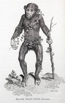 Black Oran Otan Chimpanzee, Tyson Art Print