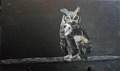 Pastel - Black Owl by Richard Le Page