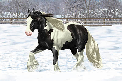 Black Pinto Gypsy Vanner In Snow Art Print