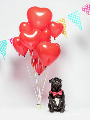 Photograph - Black Pug Dog In A Red Bowtie With Valentine Decorations. by Michal Bednarek