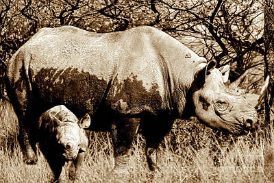 Photograph - Black Rhino And Youngster by Baggieoldboy
