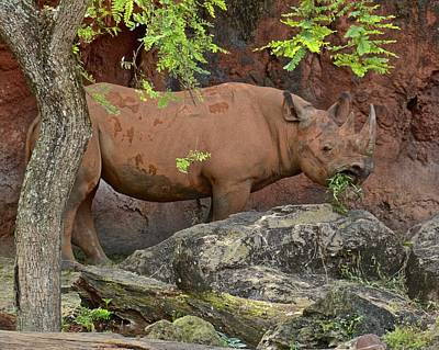 Photograph - Black Rhino by Carol Bradley