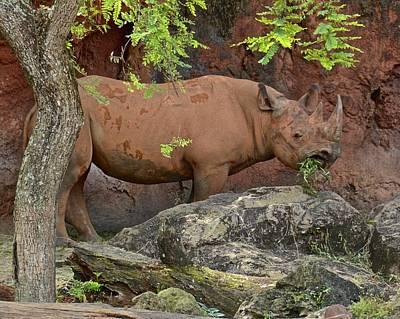 Photograph - Black Rhino by Carol Bradley