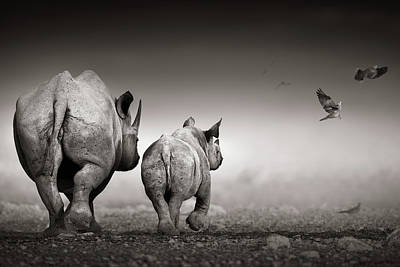 Birds Royalty-Free and Rights-Managed Images - Black Rhino cow with calf  by Johan Swanepoel