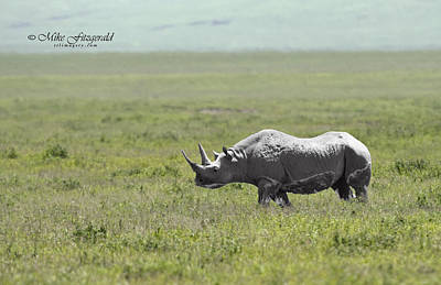 Photograph - Black Rhino by Mike Fitzgerald