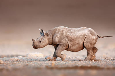 Black Rhinoceros Baby Running Art Print by Johan Swanepoel