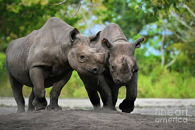 Photograph - Black Rhinoceroses by Olga Hamilton