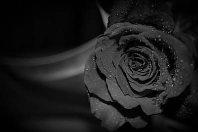 New Years - Black Rose With Blade by Paul Gavin