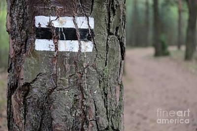 Photograph - Black Route by Dariusz Gudowicz