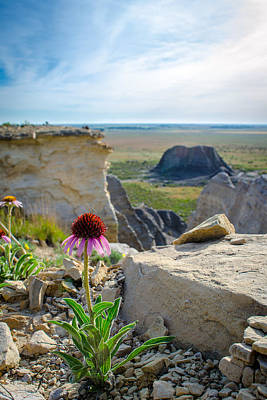 Photograph - Black Sampson In The Badlands by Jeff Phillippi