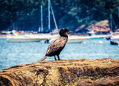 Photograph - Black Sea Bird 2 by Lilia D