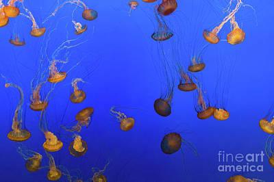 Monterey Bay Aquarium Photograph - Black Sea Nettle Jellyfish - Monterey by Henk Meijer Photography