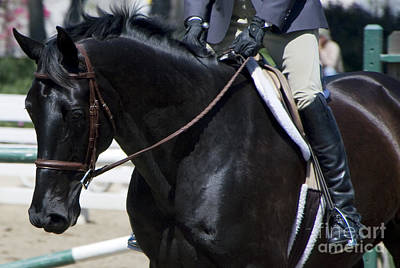 Photograph - Black Show Horse by Waterdancer