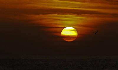 Photograph - Black Skimmer Sunset by Judy Wanamaker