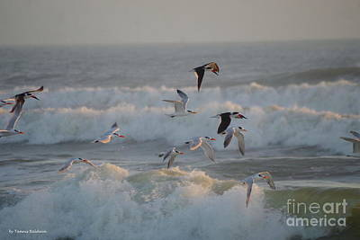 Photograph - Black Skimmers And Gulls by Tannis Baldwin