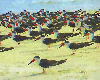 Digital Art - Black Skimmers Coastal Sea Birds  by Rebecca Korpita