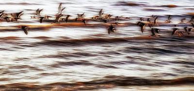 Photograph - Black Skimmers Of Long Beach - Mississippi - Birds by Jason Politte
